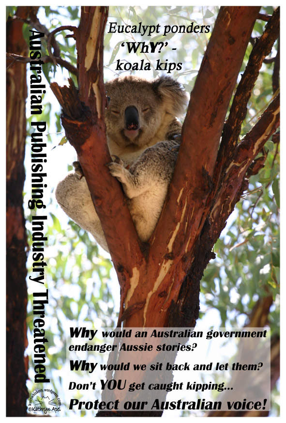 KatApel_KoalaPostcard