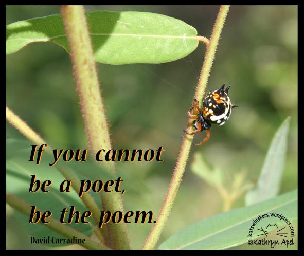 KatApel_Poet
