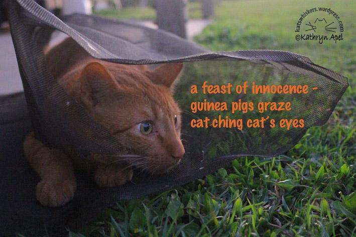 KatApel_Cat'sEyes