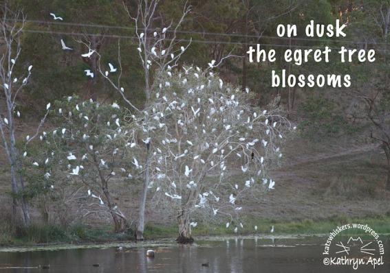 KatApel_EgretBlossoms